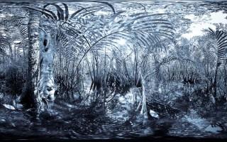 The Tatai River - Mangroves and Estuary
